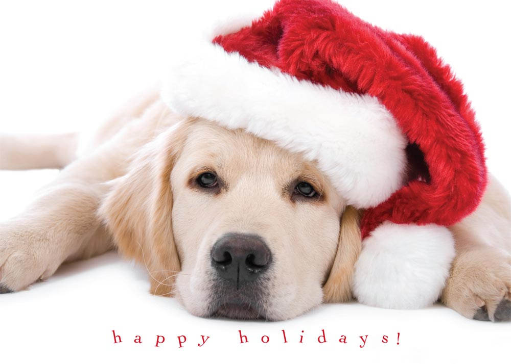 Cute Dogs And Christmas Quotes Quotesgram