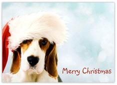 Santa Beagle