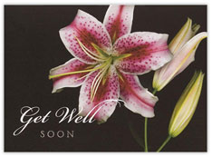 Stargazer Lilly Get Well