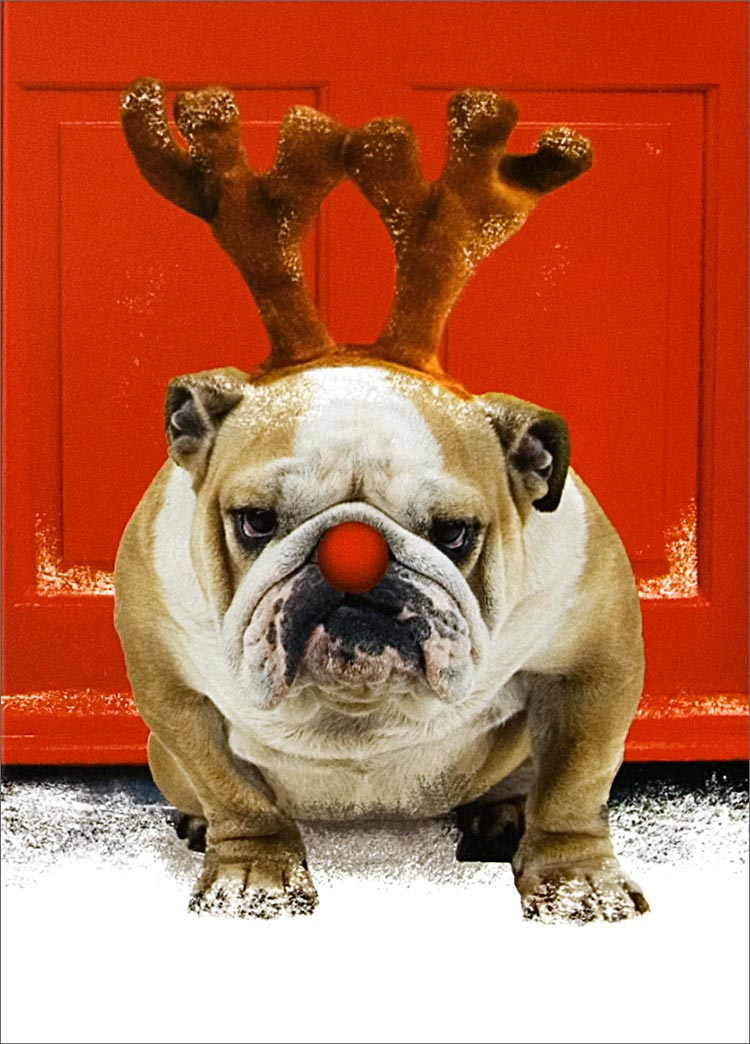 funny christmas bulldog - photo #1