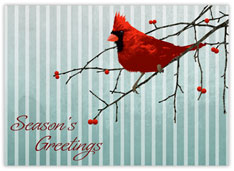 Holiday Cardinal Greetings
