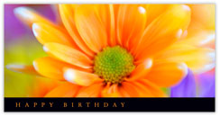Delightful Daisy Birthday Card