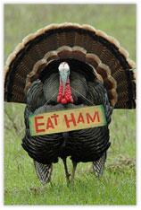 Eat Ham Thanksgiving Postcard
