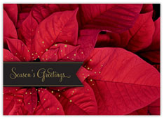 Picturesque Poinsettia Holiday Card