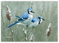 Snowy Bluebirds