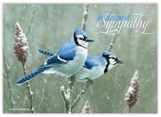 Birds of Sympathy
