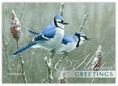 Blue Jay Greetings