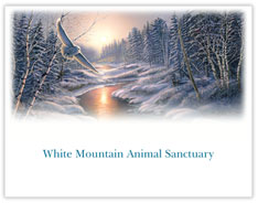 Solstice Snowy Owl Charity Card