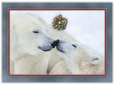 Polar Bear Kisses