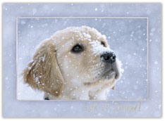 Let it Snow Charity Card