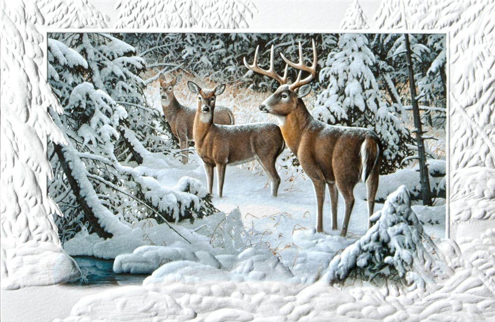 Deer Christmas Cards Reindeer Christmas Cards: www.cardsdirect.com/product/1314654/the-edge-of-light.aspx